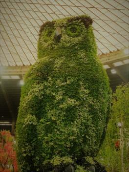 euroflora 2011 (2)